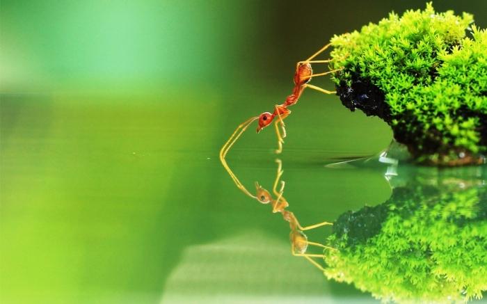 Gambar-Semut-Merah-di-Air.jpg